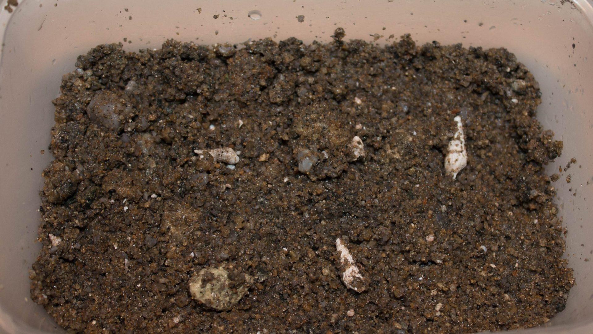 Písek z oblasti Machili Island